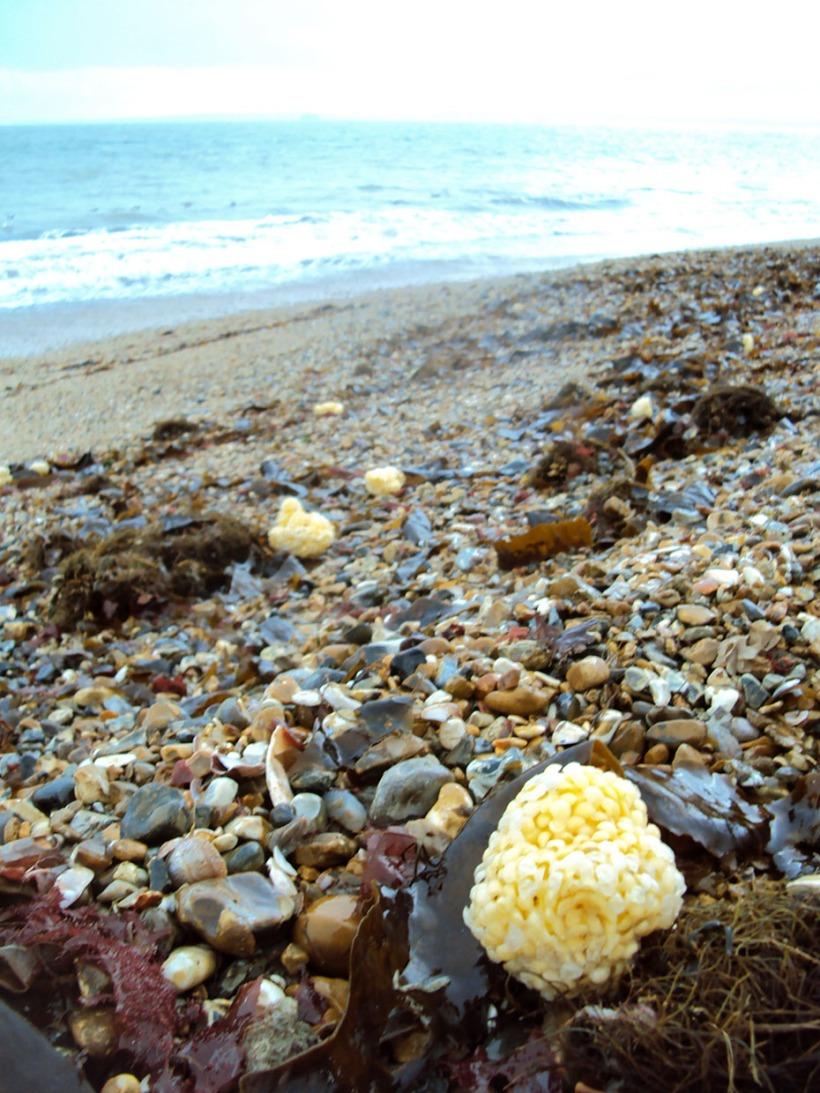 Sponges, pebbles and seaweed.